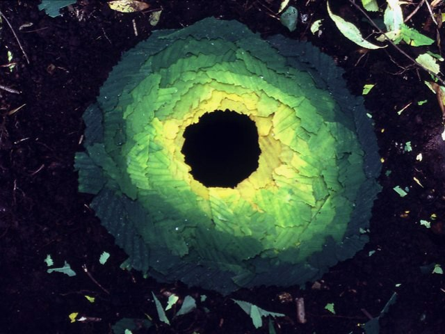 Andy Goldsworthy Green Leaves