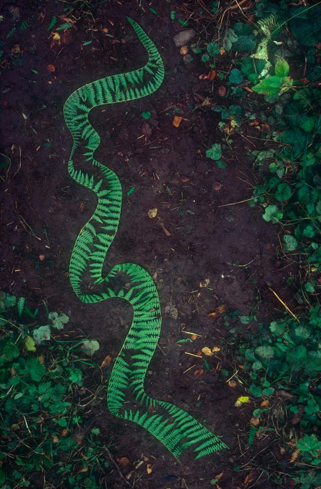 Andy Goldsworthy Grass