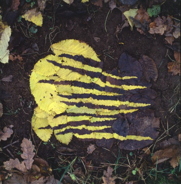 Andy Goldwworthy Yellow and Dark Elm Leafwork, Dumfrieshire 1986