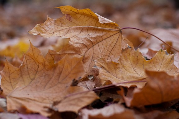 Close-up of fallen leaves by Horia Varlan