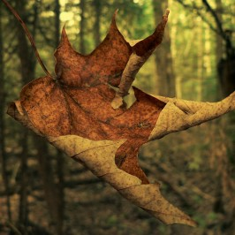 Falling leaves, autumn photographs