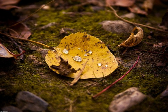 Tears of fall by Dawn Perry