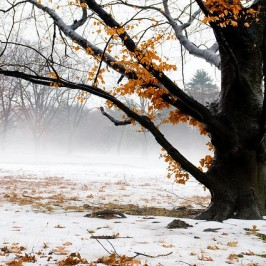 Brrrr… a collection of snowy winter photographs