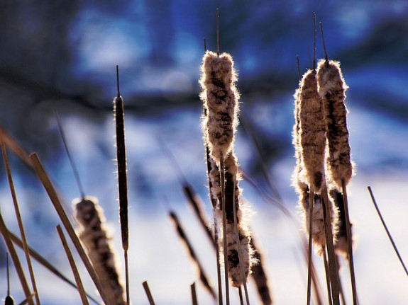 Winter Rushes by Grant McDonald