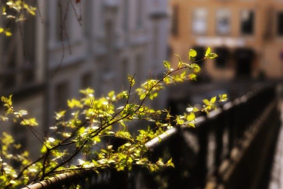 Urban Spring by aha42 | tehaha on flickr