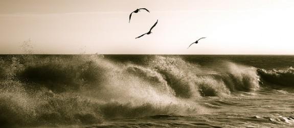 Summer Flight by paulineRroupski on Flickr