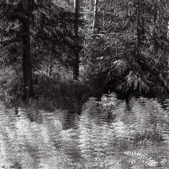 Summer Forest by Jukka Vuokko on Flickr
