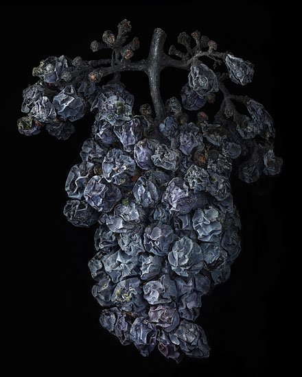 Nobel Rot 1, photograph by Peter Lippmann