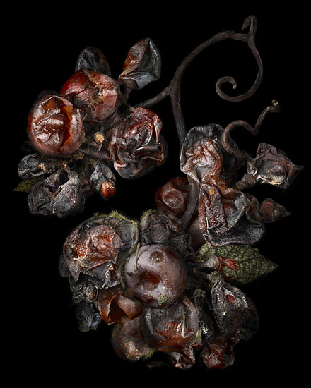Nobel Rot 16, photograph by Peter Lippmann
