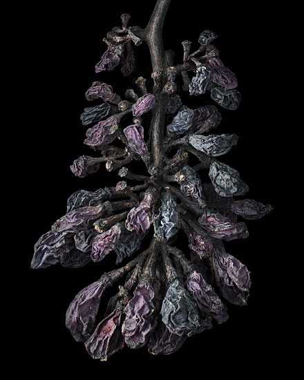 Nobel Rot 6, photograph by Peter Lippmann
