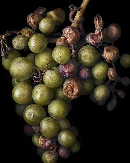 Nobel Rot 7, photograph by Peter Lippmann