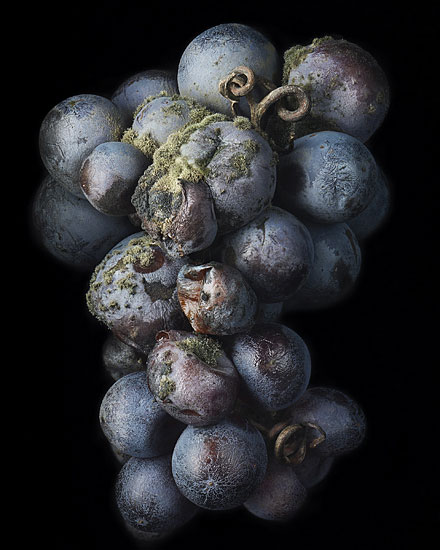 Nobel Rot 8, photograph by Peter Lippmann