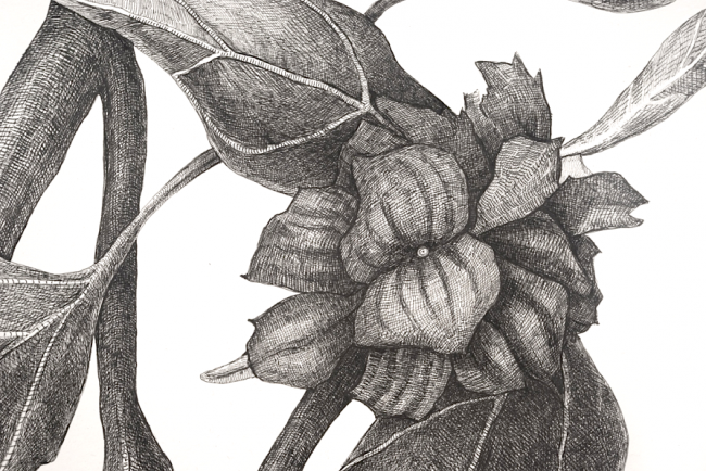 Black Weed (detail), 2010, ink on paper, by Joan Linder