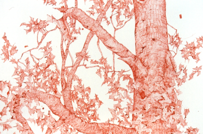 Quill Pen Drawings by Joan Linder