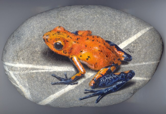 Dendrobates, paint on stone by Roberto Rizzo