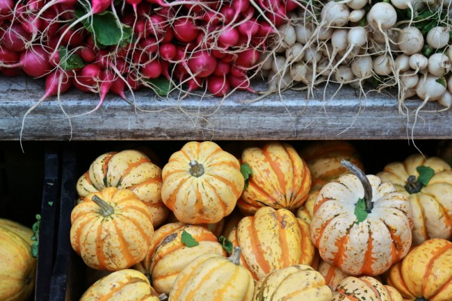 Tendrils and gourds, Union Square Market, New York City, photograph by Ric Camacho