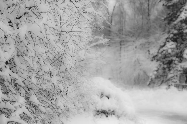 Winter Scene #22- Near Bow Bridge, Central Park. Post-Nemo. Photograph by Ric Camacho